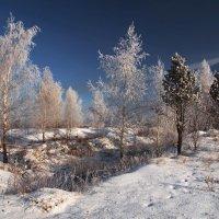 В декабре берёзки стройные стоят... :: Александр Попов