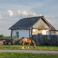 Сельский полдень :: Татьяна Степанова