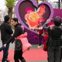 Ежегодный фестиваль цветов в Гонконге :: Sofia Rakitskaia