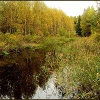 Тихая осень :: Светлана