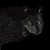 серый волк :: Юлия Денискина