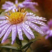 после дождя :: Наталья