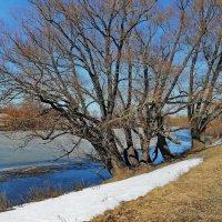 Река готовит ледоход... :: Лесо-Вед (Баранов)