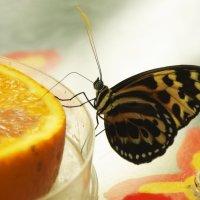 тропическая бабочка... :: Inga Керрен