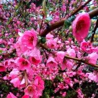 Весенний цветущий Сочи :: Антонина Владимировна Завальнюк