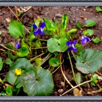 Картина о весне. Первые фиалки :: Нина Бутко