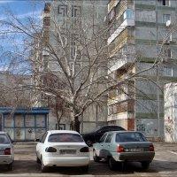 Под любимым деревом :: Нина Корешкова