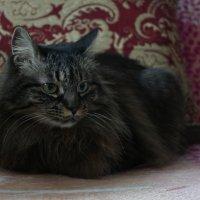 Кошка :: Антон Костюк