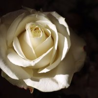 Дарите девушкам цветы! :: Валентина ツ ღ✿ღ