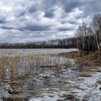 Весна пролилась перым мартовским дождём... :: Лесо-Вед (Баранов)