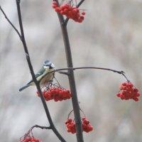 птичка-синичка :: Александра Романова