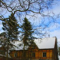 Предчувствие  весны.... :: Tatiana Markova
