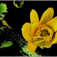 Лютик - солнечный первоцвет :: Нина Корешкова