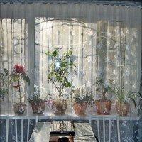 Весеннее утро на кухне :: Нина Корешкова