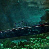 Враждебные тропики или кубинская самба для Фокстрота... :: Кай-8 (Ярослав) Забелин