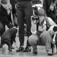 На выставке собак Евразия 2017 :: Анастасия Смирнова