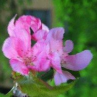 Весны цветенье.... :: Tatiana Markova