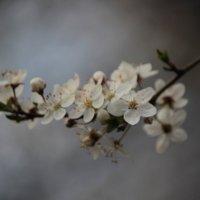 Весна пришла-2. :: Руслан Грицунь