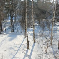 Вид из окна в солнечный день :: Олег Афанасьевич Сергеев