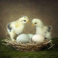 Двое из одного гнезда :: Ирина Приходько
