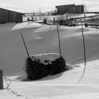 Одинокий стог :: Яна Старковская