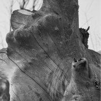 Формы дерева. :: Андрий Майковский