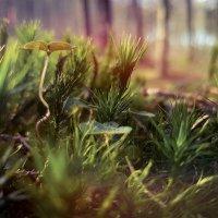 тихий, нежный мир :: Лилия Winоgradowa