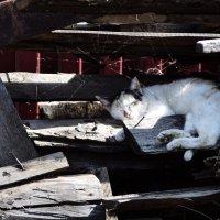 Спящий кот :: Алексей Обоскалов