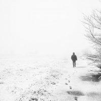 в туман :: Алина Гриб