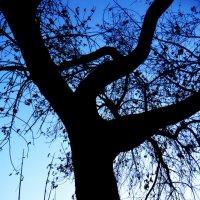 Дерево... :: Дмитрий Петренко