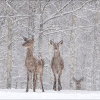 Let it snow, let it snow, let it snow... :: Влад Соколовский