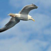 В небе над Балтикой :: Валерий Подорожный