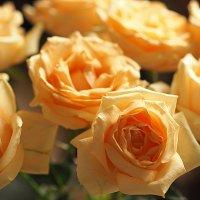 цветы для любимых-розы :: Олег Лукьянов