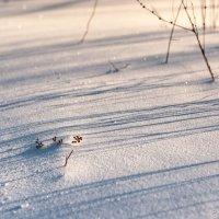 Под снежным одеялом. :: Борис Руненко