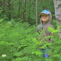 По лесу гуляю комаров не боюсь :: Николай Масляев