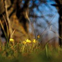 Пробуждение весны.... :: владимир
