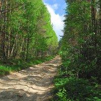 Майский лес :: Николай Масляев