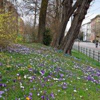 И вновь весна своё нам дарит пробуждение...... :: Galina Dzubina