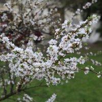 Весна пришла-12. :: Руслан Грицунь