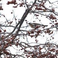 Птица :: AristovArt