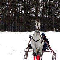 Принц на белом коне. :: nadyasilyuk Вознюк