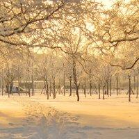 Вечерний свет среди деревьв :: Владимир Гилясев