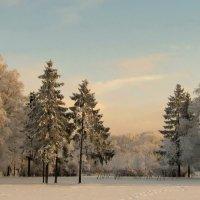 Вечерняя полянка :: Владимир Гилясев