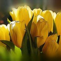 Свет весны :: Ольга Чистякова