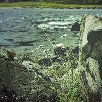 Цветок и камень :: Аркадий Пазовский