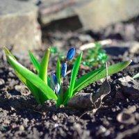 Вессение цветы :: Дарья Логвинова