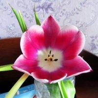 Тюльпан расцвёл :: genar-58 '