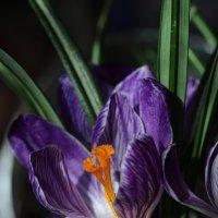 Фиолетовый- цвет совершенства.. :: Ирина Сивовол