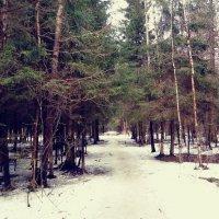 Лесная тропа :: Daria Zhdanova