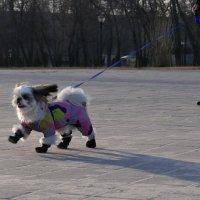 Летящей походкой :: Анатолий Шулков